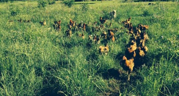 Black_Rabbit_Farm_SFGTour